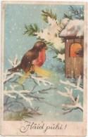 Christmas Greeting Card - Bullfinch - Birds - HM - Circulated In Estonia 1930s - Noël