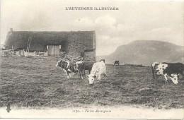 Puy De Dome : Ferme  Auvergnate, Vaches - France