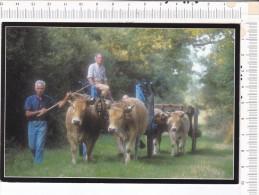 LE DRESNY   -   Fête De La   VACHE  NANTAISE    -   8/9  Septembre  2001 -  Attelages - Autres Communes
