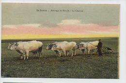 En BEAUCE: Attelage De Boeufs - La Charrue - Lenormand Orléans - Centre-Val De Loire