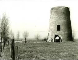 HAALTERT (Oost-Vlaanderen) - Molen/moulin - Historische Opname Van De Verdwenen Stenen Molenromp (´Topmolen´) In 1982 - Haaltert