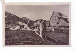SAN GOTTARDO Gotthardhospiz Chiens Saint Bernard - Bergamo