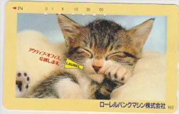 @CATS-022 - 110-164945 - Gatos