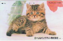 @CATS-038 - 110-128127 - Gatos