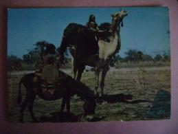 CPM AFRIQUE - TCHAD  N�5430 SCENE DE VIE A ABECHE