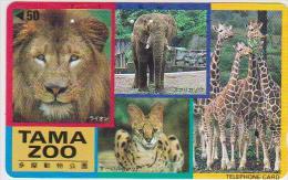 @ELEPHANT-004 - TAMA ZOO - LION - GIRAFFE - CHEETAH - 110-110008 - Jungle