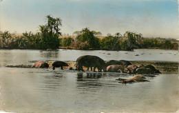 Animaux - Hippopotame - Faune Africaine - Hippopotames Au Bain - Semi Moderne Petit Format - état - Hippopotames