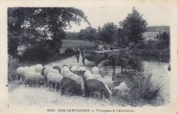 NOS CAMPAGNES  - Troupeau à L'Abreuvoir - Other
