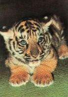 Postcard - Tiger At Allwetter Zoo. P32 - Tigers