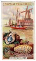 Chromo Chocolat Aiguebelle : Les Coquillages Cyprée Argus / Bulle ( Moulin à Vent ) - Aiguebelle