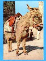 Q342, âne Sarde, Sardaigne, Sardegna, Fantaisie, GF, Circulée 1970 - Ezels