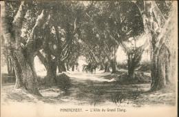 Pondichery L'Allée Du Grand Etang - India
