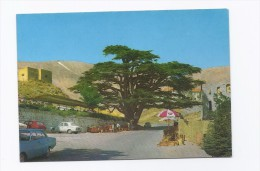 Cedre Millenaire Carte Postale Liban, Postcard Lebanon - Liban