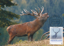 D19926 CARTE MAXIMUM CARD FD 2013 NETHERLANDS - DEER STAG CERF CP ORIGINAL - Gibier