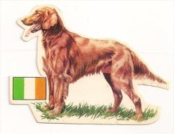 Image Découpée N° 29 Setter Irlandais  De L´album Les Chiens Offert Par La Tour Cadet Roussel. - Découpis