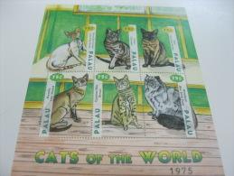 Palau-Fauna-Cats - Palau