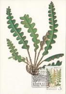 13155- RUSTYBACK FERN, PLANTS, MAXIMUM CARD, OBLIT FDC, 1987, RUSSIA - Plants