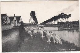 Canal En Flandre, Herder Met Schapen, Shephert En Sheep, Moutons (pk16070) - Elevage