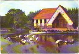 Meli-Park Adinkerke Les Flamants Roses - België