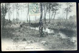 Cpa Du 40 Un Coin Des Landes -- Troupeau Dans Le Marais ....  Ychoux   JA15 39 - France