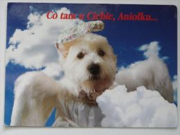 Dog  Chien  Hund  / - Cani