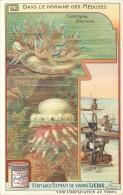 CHROMO LIEBIG - Dans Le Domaine Des Méduses - Cassiopée Stéphalie - Série Française N° 938 - Année 1908 - Liebig