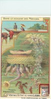 CHROMO LIEBIG - Dans Le Domaine Des Méduses - Porpalie Stéphanomie - Série Française N° 938 - Année 1908 - Liebig