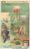 CHROMO LIEBIG - Dans Le Domaine Des Méduses - Aurélie Pélagie - Série Française N° 938 - Année 1908 - Liebig