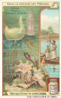 CHROMO LIEBIG - Dans Le Domaine Des Méduses - Cydippe Physalie Lucernaire Auriculée -Série Française N° 938 - Année 1908 - Liebig