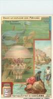CHROMO LIEBIG - Dans Le Domaine Des Méduses - Cestus Veneris Rhizostome - Série Française N° 938 - Année 1908 - Liebig