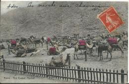 YEMEN - ADEN - The Camel Market - Marché Aux Chameaux - Yemen