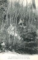 N°3343A -cpa Saint Sauveur Le Vicomte -tombeau Du Diable Au Bois De L'enfer- - Saint Sauveur Le Vicomte