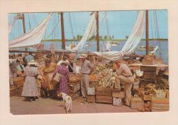 D54638 Postcard Vintage Bahamas Nassau, Harbour Side Market, Sailboats, Hound Type Dog,, Used