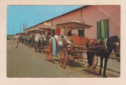 D54642 Postcard Vintage Bahamas Nassau, Line Of Horse Drwn Carriages Awaiting Sightseers, 1960, Used