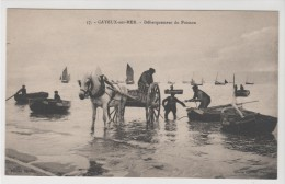 CAYEUX SUR MER - Débarquement Du Poisson - Cayeux Sur Mer