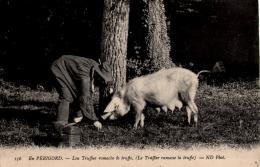 PERIGORD Le Truffier Ramasse La Truffe - Non Classificati