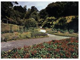 (355) New Zealand - Wellington Botanical Gardens - New Zealand