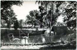 Décines (69) (Autrefois Dans L'Isère 38) - Le Nouveau Jardin Public - Autres Communes