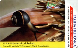 CUBA-UR019-POLYMITA PICTA IOLIMBATA - Cuba