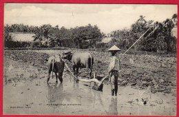 ANNAM - Le Labourage Annamite - Vietnam