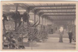 Brussel, Bruxelles Koninklijk Museum Van Natuurlijke Historie (pk16143) - Musées