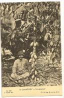 S2575 - 8 - Dahomey - Un Cacaoyer - Dahomey