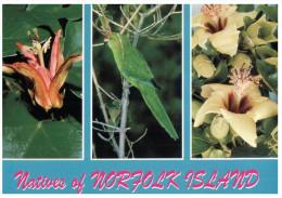 (568) Norfolk Island Nature - Bird And Flowers - Norfolk Island