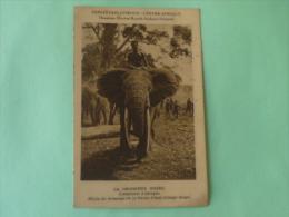 La Croisière Noire, L'Eléphant D'AFRIQUE, Ecole De Dressage De La Ferme D'API - CONGO BELGE - Belgian Congo - Other