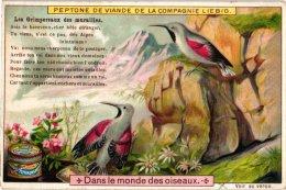0651 Dans Le Monde Des Oiseaux LIEBIG Complete Set Alcyon, Merle  Doré, Huppe,  Bec Croisé,  Chardonneret, Grimpereaux - Liebig