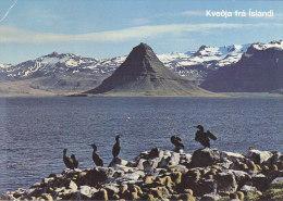 Iceland - Snaefellsnes Peninsula With Cormorants - Iceland