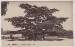 NIMES - Le Grand Cèdre - Nîmes