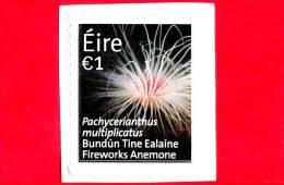 IRLANDA - EIRE - Usato - 2014 - Fauna - Vita Marina - Fireworks Anemone - 1 - Usati