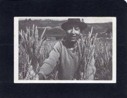 """51629    Ecuador, Cet Agriculteur Des Andes Montre Le Resultat Obtenu Grace A L""""amelioration Des Semis Et Engrais, NV - Ecuador"""