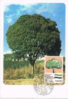 R 866. Tarjeta Maxima MERIDA (Caceres) 1984. Arbol. Estatuto Autonomia - Tarjetas Máxima